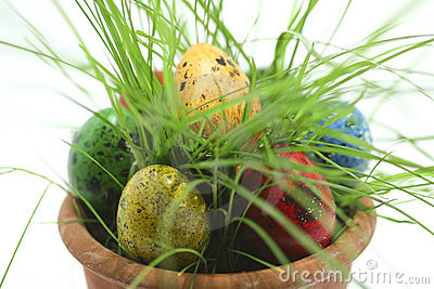 Easter eggs hiding in grass