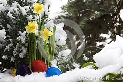 Easter eggs and narcissus in the snow