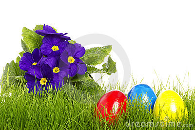 Easter eggs with a purple primula