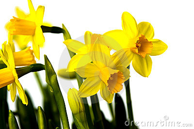 Easter flowers lily daffodil