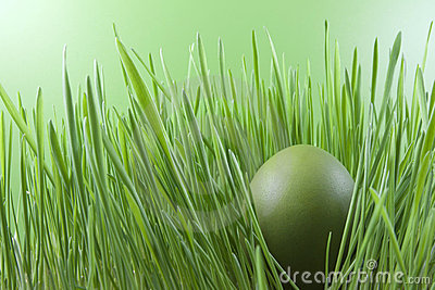 Easter green egg on the grass