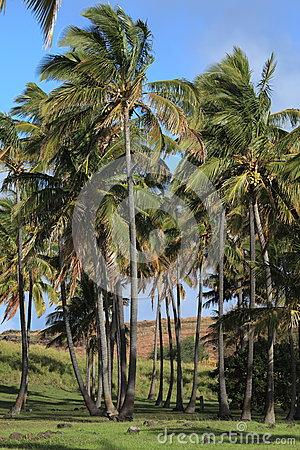 Easter Island Palm Tree Beach Anakena