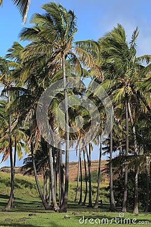 Easter Island Palm Tree Beach Anakena