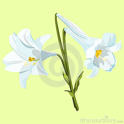 Easter Lilies Royalty Free Stock Photo - Image: 19151775