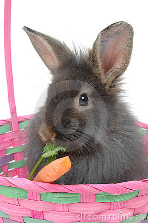Free Easter Lion Rabbit 2 Royalty Free Stock Images - 609609