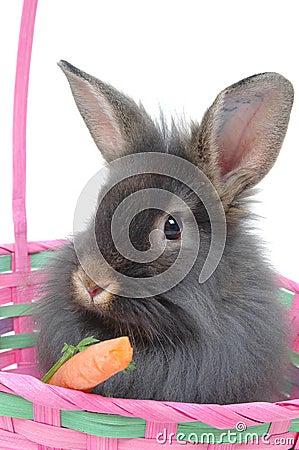 Free Easter Lion Rabbit 4 Stock Photos - 647903