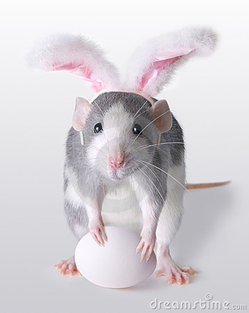 rat is wearing bunny ears and holding an egg for Easter.