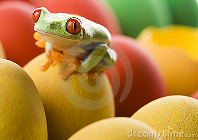 Easter red frog