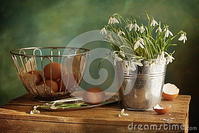 Easter snowdrops