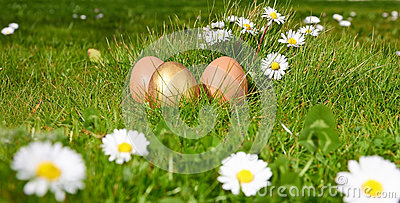 Easterl eggs on green grass