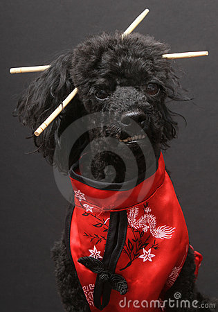 Eastern Inspired Dog with Chopsticks