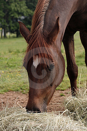 Free Eating Hay Stock Photography - 4337612