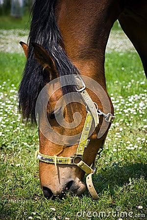 Free Eating Horse Stock Photo - 9236210