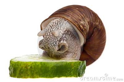 Eating snail