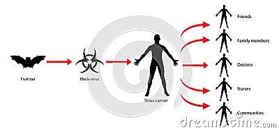 Stock Illustration Ebola Transmission Virus Spread Diagram Illustration Showing Human To Human Doctors Nurses Family Members Being Image45563018