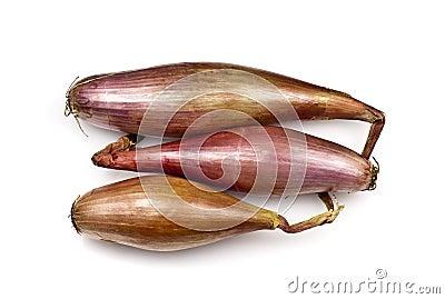 Echalion Onions