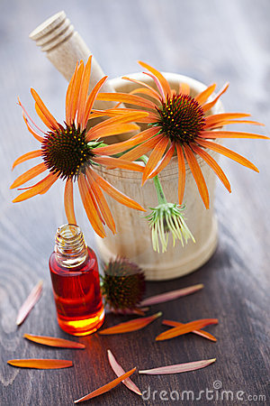 Echinacea alternative medicine