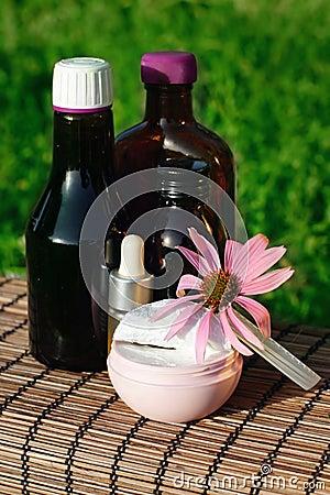 Echinacea alternative medicine