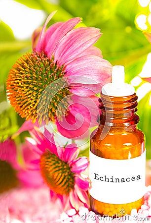 Echinacea essential oil