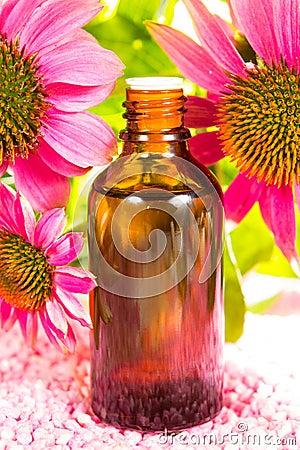 Echinacea plant extract
