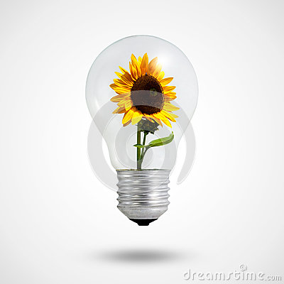 Free Eco Concept: Light Bulbs With Sunflower Inside Royalty Free Stock Photography - 25426397