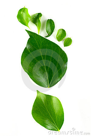 Eco footprint made from leaves