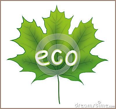 Eco Maple Leaf
