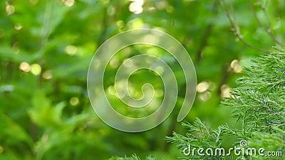 Eco-Natur pflanzt grünen Gesundheitshintergrund stock video footage