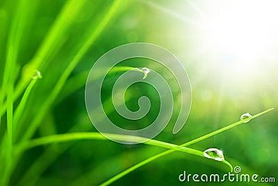 Eco naturbakgrund med gräs, Sun och Waterdrops