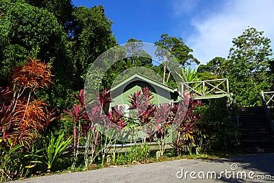 Eco Tourismusausgangsstütze - Häuschen neben Dschungel