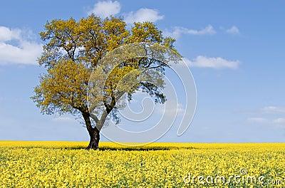 Eco tree landscape