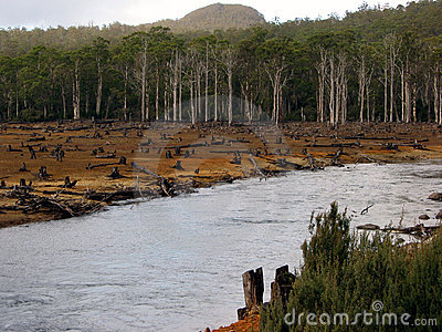 Eco-vandalism in Tasmanian forests 2