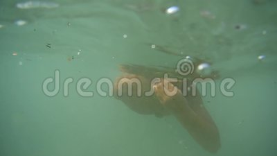 Ecologia má, água suja, oceano, baía, mar O menino nada sob a água Tome da natureza vídeos de arquivo