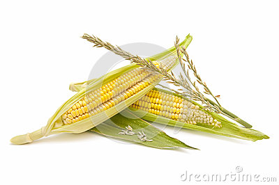 Ecological Corn