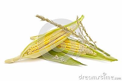 Ecological Corn