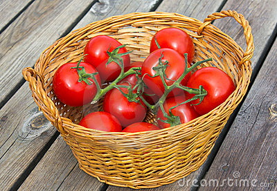 Ecological Tomatoes