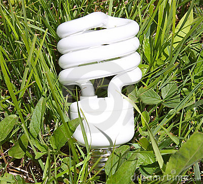 Ecologically Friendly Bulb