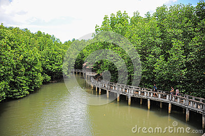 Ecotourism for mangrove forest Editorial Photography