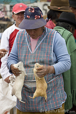 Ecuador - Livestock Market in Saquisili  Editorial Stock Image
