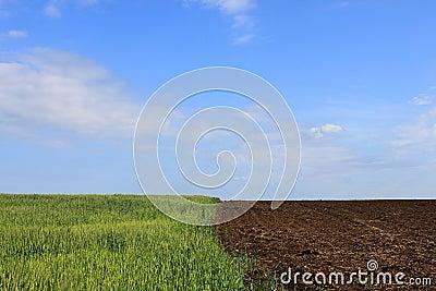 Edge of field