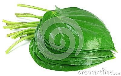 Edible betel leaf