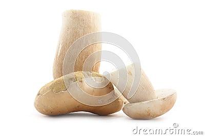 Edible boletus mushrooms