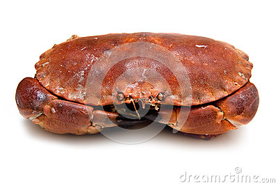 Edible brown crab.