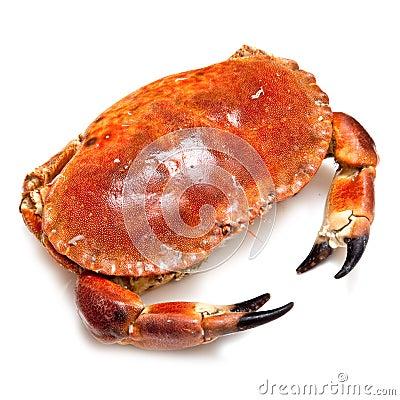 Edible brown crab.