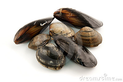 Edible Molluscs Royalty Free Stock Photography - Image: 19012067