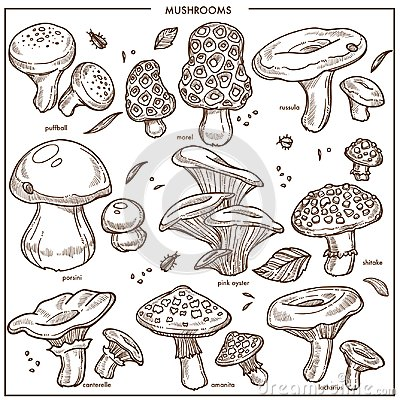 Free Edible Mushrooms Sketch Vector Icons Champignon,  Royalty Free Stock Photography - 105758437