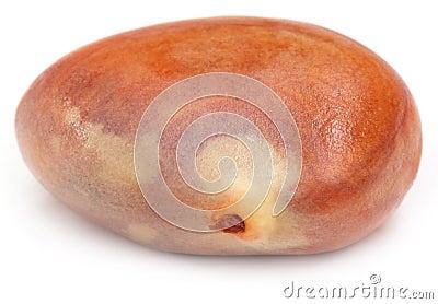 Edible seed of jackfruit
