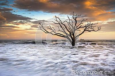Edisto Island SC Beach sunset landscape Charleston