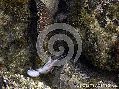 Eel versus Octopus