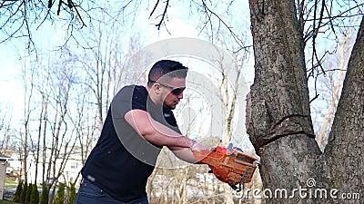 Een arbeider snijdt gevaarlijk bij een boom met kettingzaag bij lokaal park stock videobeelden